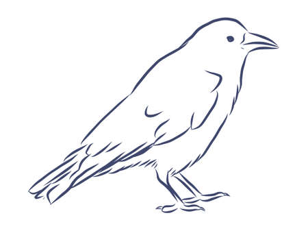 Vector hand drawn raven. Graphic black and white illustration.Rough sketch of crow Stock Illustratie