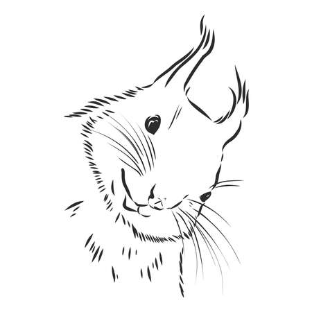 cute smiling squirrel, portrait of wild rodent, vector sketch illustration