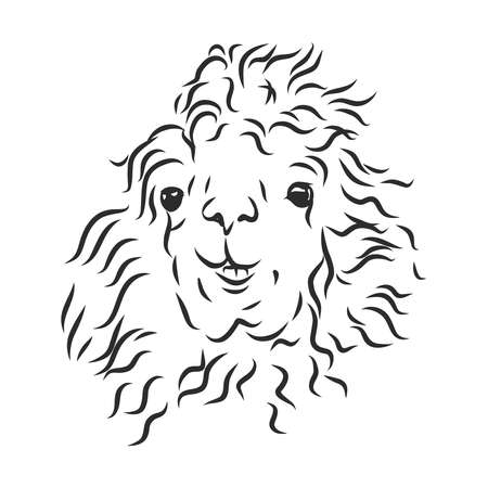 shaggy llama alpaca portrait, vector sketch illustration Stock Illustratie
