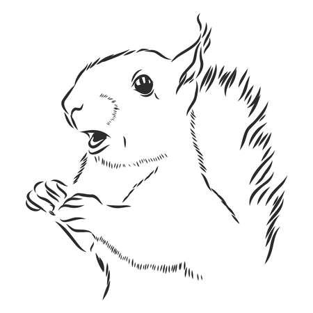 Linda ardilla sonriente, retrato de roedor salvaje, ilustración de dibujo vectorial