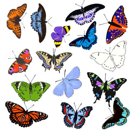 colorful realistic butterfly, insect, vector illustration for decoration