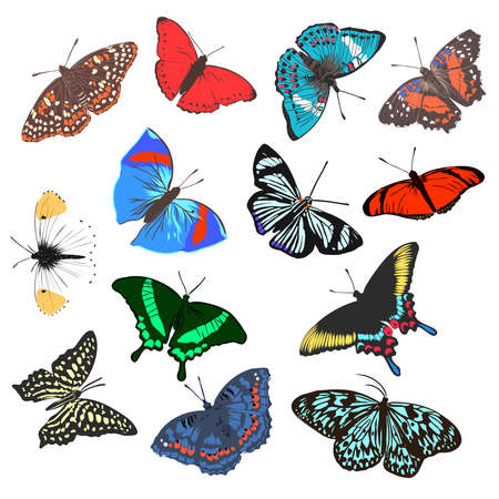papillon réaliste coloré, insecte, illustration vectorielle pour la décoration