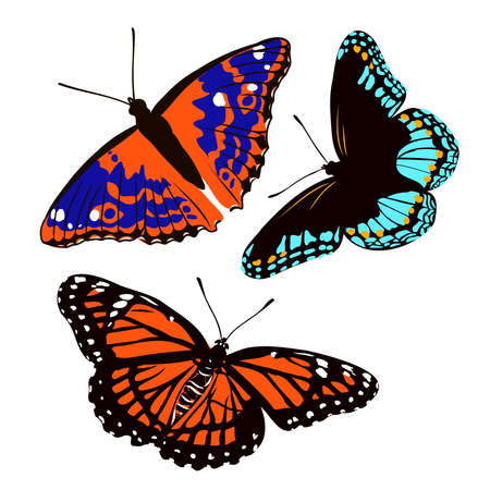 colorful realistic butterfly, insect, vector illustration for decoration Vetores