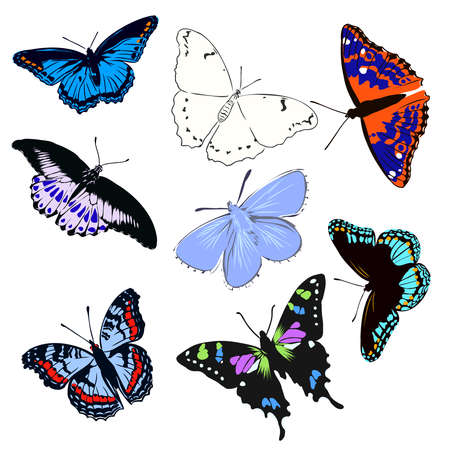 colorful realistic butterfly, insect, vector illustration for decoration Ilustración de vector