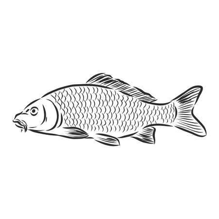 river fish, fishing sign, silhouette, vector sketch illustration