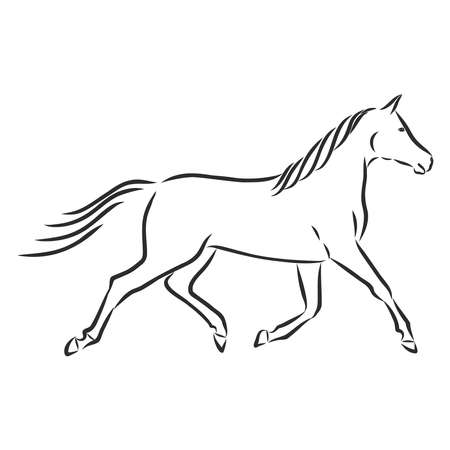 beautiful running horse, silhouette, pet, vector sketch illustration Vecteurs