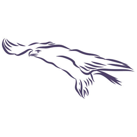 Eagle - hand drawn vector llustration realistic sketch illustration