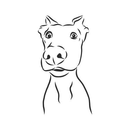 Sketch of funny surprising dog. vector illustration. Illusztráció