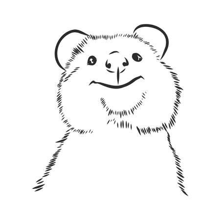 australian kwokka smiling portrait, vector sketch illustration Vector Illustration