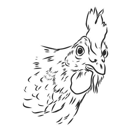 Black and white sketch of a chickens face. Vector portrait.