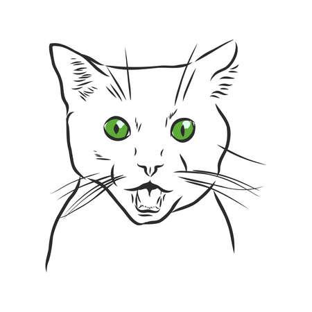 Retrato de gato. Ilustración dibujada a mano