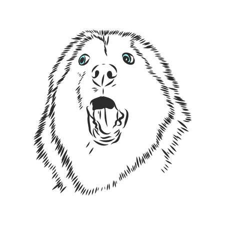 Husky dog portrait, Vector sketch, Hand drawn illustration