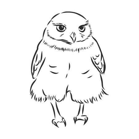 funny owl character. vector sketch illustration