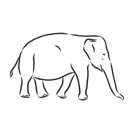Beautiful sketch of an adult Asian elephant with line