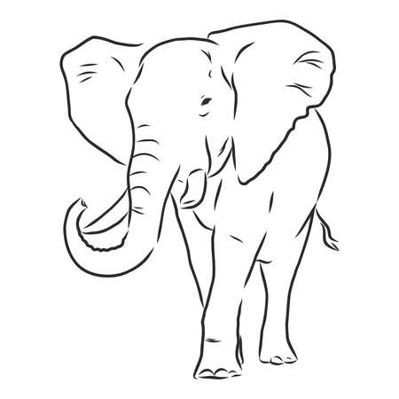 african elephant silhouette - freehand on a white background, vector illustration