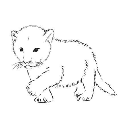 Lion baby, vector sketch illustration