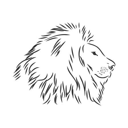 Hand drawn lion. Sketch vector illustration