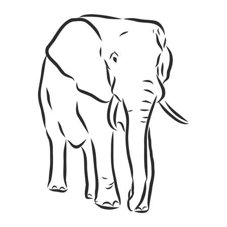 elephant silhouette - freehand on a white background, vector illustration