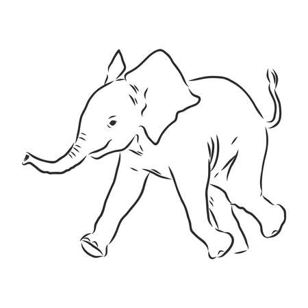 Baby elephant in outline style isolated on white background, vector illustration of elephant calf, coloring page for children