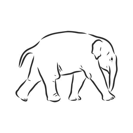 Baby elephant in outline style isolated on white background, vector illustration of elephant calf, coloring page for children Stock fotó - 143762887