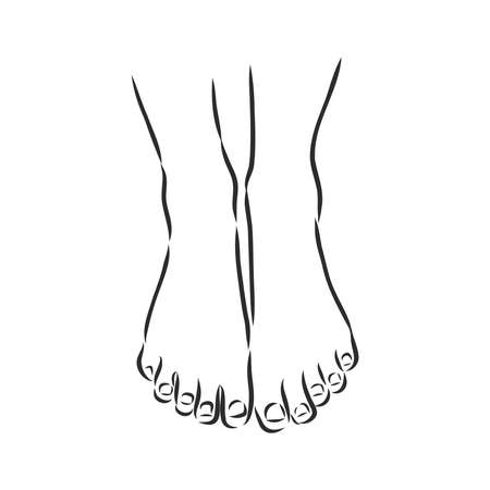 Human woman bared feet line drawing. Vector illustration