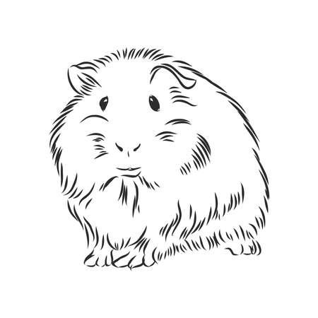 Cochon d'Inde mignon dodu, croquis de graphiques vectoriels en noir et blanc