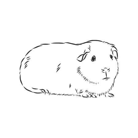 Meerschweinchen oder Cavia Inky handgezeichnete Skizze Vektor-Illustration Vektorgrafik