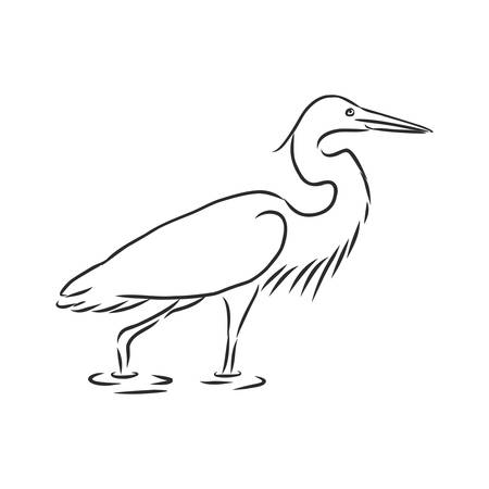 Hand drawn realistic sketch of rufous night heron perched on a branch Illustration