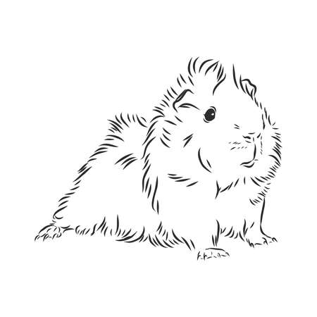 cute Guinea pig, pet, vector sketch illustration