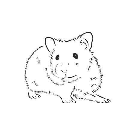 cute hamster, pet rodent vector sketch Vector Illustration
