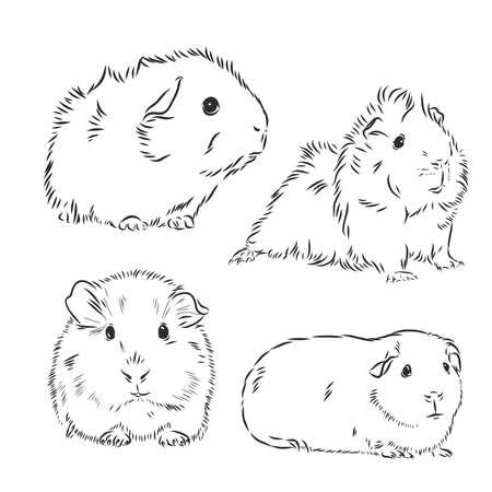 Guinea pig or Cavy inky hand drawn sketch vector illustration Vektorgrafik