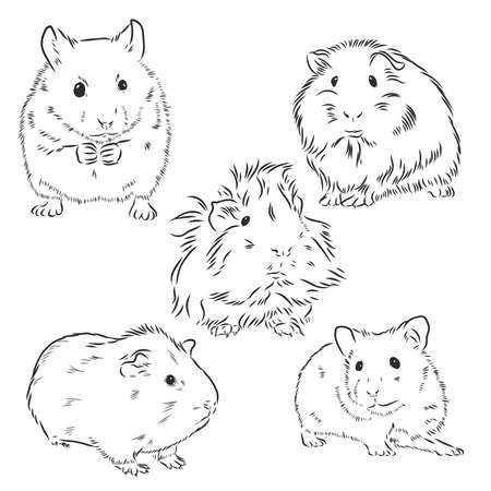 Guinea pig or Cavy inky hand drawn sketch vector illustration Vecteurs