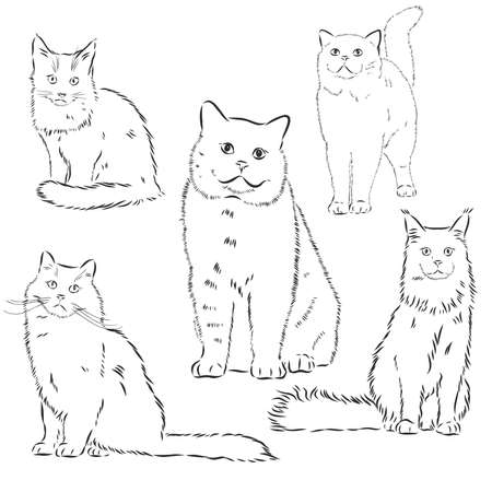 Cats set, vector illustration, hand-drawn cute fluffy cats.