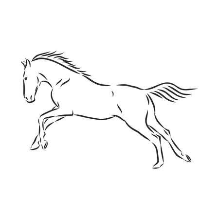 running horse vector illustration - black and white outline