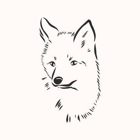 Fox portrait. Hand drawn vector illustration. Can be used separately from your design.