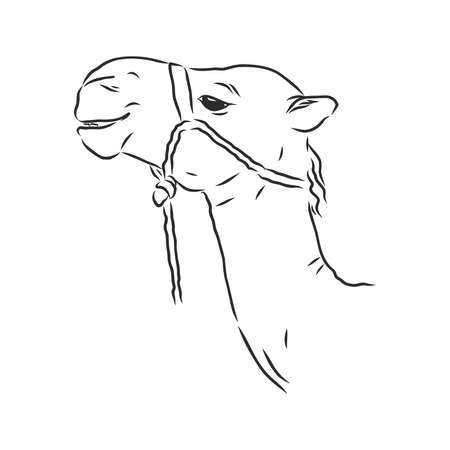 Hand sketch of the head of a camel. portrait of a camel, head of a camel, vector sketch illustration Vectores