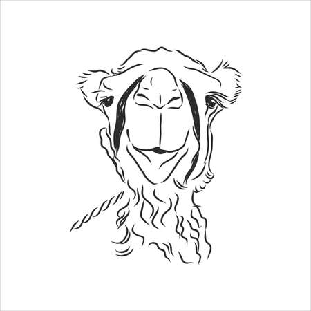 Hand sketch of the head of a camel. portrait of a camel, head of a camel, vector sketch illustration Illustration