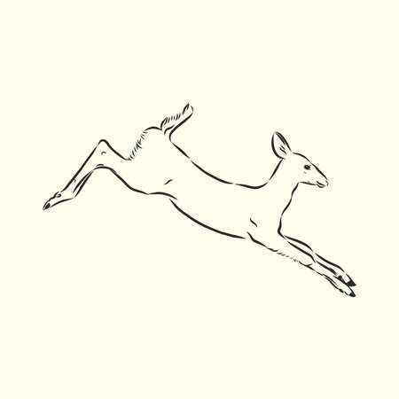 Young deer vector silhouette. fawn, vector sketch