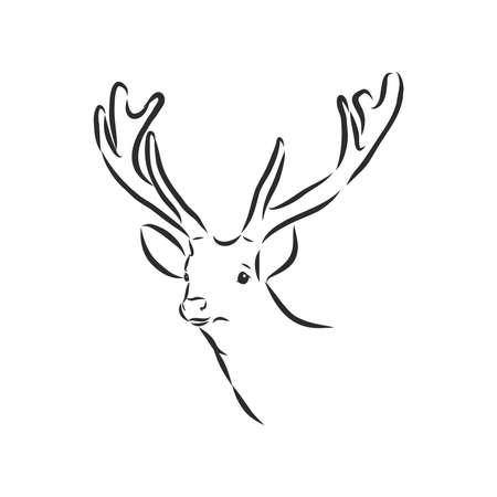 Deer portrait. Hand drawn vector illustration. Can be used separately from your design.