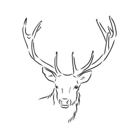 Portrait de cerf. Illustration vectorielle dessinés à la main. Peut être utilisé séparément de votre conception.