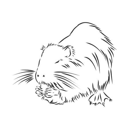 nutria black and white painted with shadow