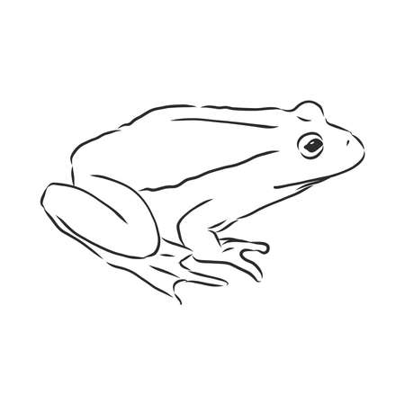 outline drawing of a frog isolated on white