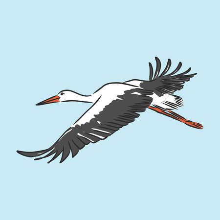 Stork sketch vector illustration. Hand sketching a stork for a design
