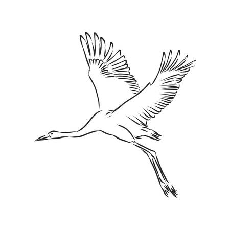 crane bird icon, bird crane vector sketch illustration Vektorgrafik