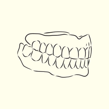 jaw vector sketch, dental jaw, vector sketch illustration