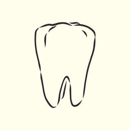 Hand-drawn black lines sketch molar, tooth. Doodle drawing. Object, Element, icon Component for illustration, design brochures for dentistry, medical manuals, books or packaging, isolated vector