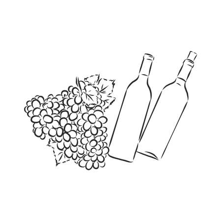 Sketch illustration of bunch of grapes