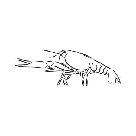 Hand drawn crayfish cancer with simple decor on white isolated background. River animal. For coloring book pages.