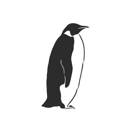 Penguin vector sketch icon isolated on background. Hand drawn Penguin icon. Penguin sketch icon for infographic, website or app.