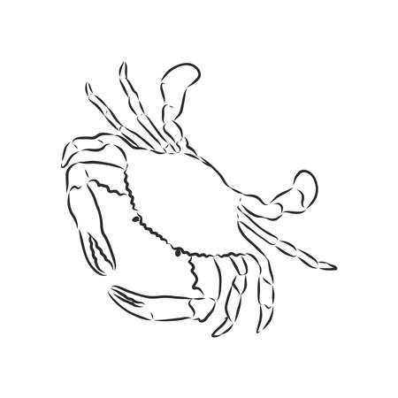 Sea blue striped illustration with crab